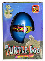 Growing Pet Turtle Egg Small